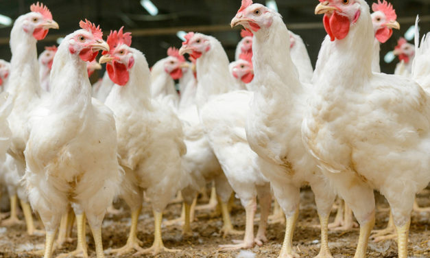 Trading partners must respect British food production standards