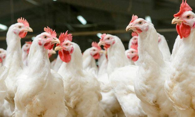 Avian Influenza national prevention zone declared